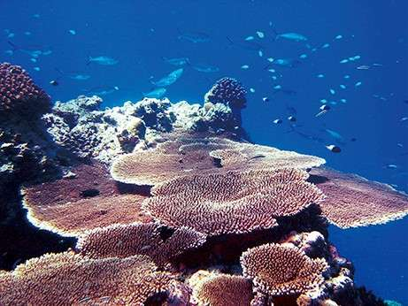 magnificent-maldives